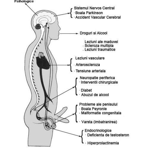 tratarea impotentei cum se pompează mușchiul penisului